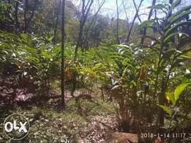 2.32 acre agricultural land for sale