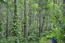2 acre coffee estate  for sale in belur near hassan