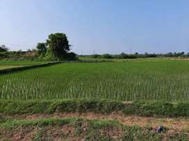 2.5 acer agriculture land sale Rs 25 lac