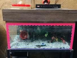 Fish equarium
