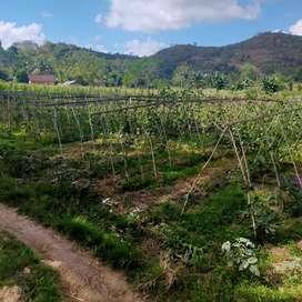 Tanah 750 M2 Selong belanak