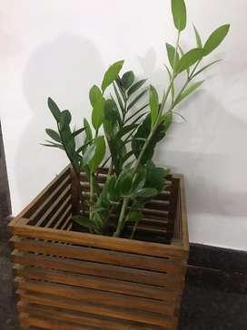 Teak wood planter box