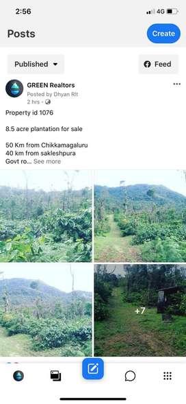 8.5 acre estate in mudigere