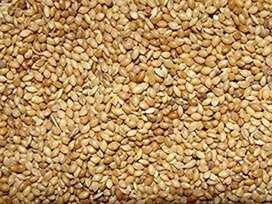 Kangni seed, Bird food.