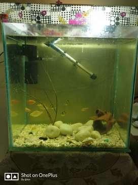 Excellent condition aquarium