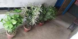 आर्टिफिशियल प्लास्टिक के गमले और पौधें–फूल, घर और ऑफिस के सजावट के लिए