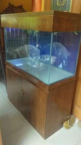 Aquarium tekwood jati minimalis