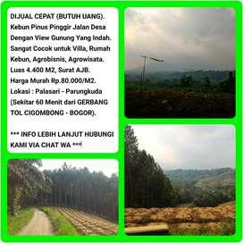 Dijual Cepat (BU) Tanah Kebun Pinus View Indah, Luas 4433m2