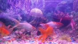 Long tail fish for sale