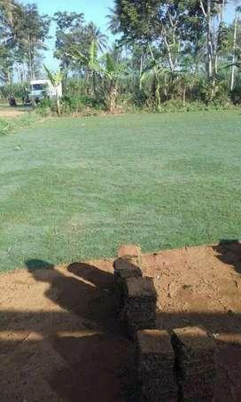 Suplyer Rumput dan Tanaman hias Bantaeng
