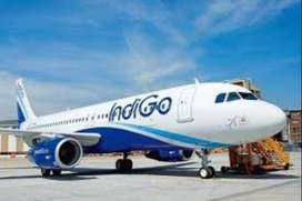 Indigo Company Ground Staff Job Vacancy  I Airport Job intrested candi