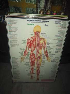 Educational health charts and posters from Uk at low prices r
