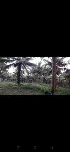 200 acre agriculture land for sale in udupi