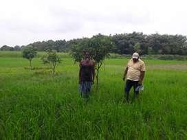 In Narsanda four lane 5.75 kattha land .