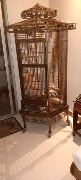 Bing parrot cage for sale