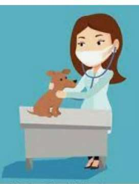 Dog Clinic needs assistant