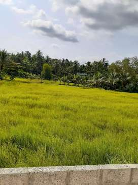 10 cent House plot for sale in REC kattangal.