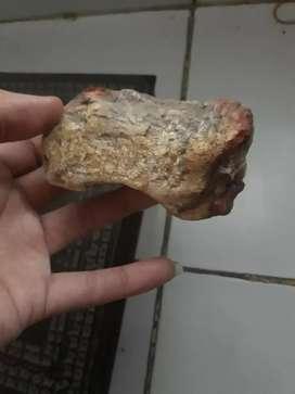 Fosil kayu jati
