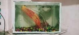 मछली एक्वेरियम