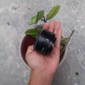 lensa fix canon 50 mm like new