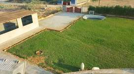Farm house Cattle Farm Dairy Farm And Residential Plot For Sale Cattle