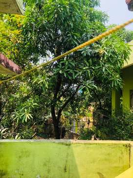 1bhk house first floor rent middle of city, good and silent locality