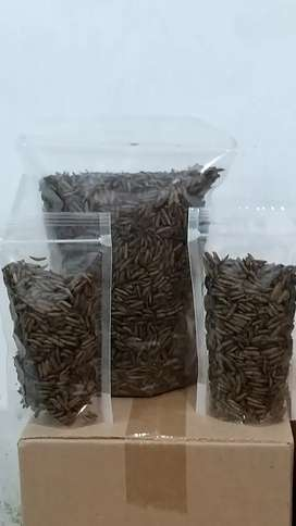 MAGGOT KERING ( Dried )