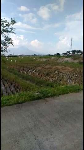 Sawah pinggir jalan sapan di desa sumbersari kec ciparay