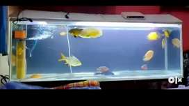 5ft aquarium with iron stand for sell
