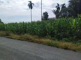 Di jual tanah daerah deli Serdang, tj. Morawa