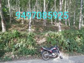 Chittar -manakkayam,Rubber estate,. House plot