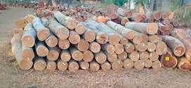 Jual kayu agatis dan rc Jawa
