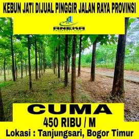 Jual Tanah Murah Harga Terjangkau Bonus Pohon Jati