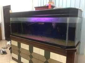 Aquarium 2 meter bisa sepaket dengan Arwana Golden Red