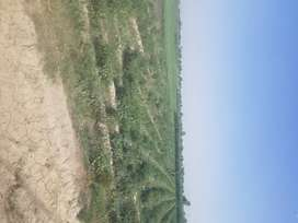 LAND FOR SALE IN RESONABLE PRICE SPEACIAL FOR DIARY FARM