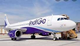 Indigo airlines job open urgent requirements