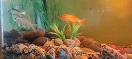 Aquarium with a pair of fish free