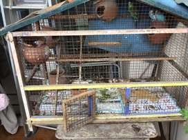 Bird cage 1 yr old in good condition