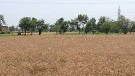 54 kanals Agriculture land linked with main road.