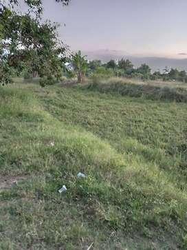 Dijual Tanah Sawah Cocok untuk Investasi Masa Depan