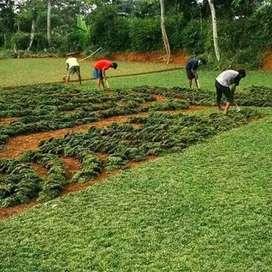 Jual rumput tukang taman menerima pembuatan kolam