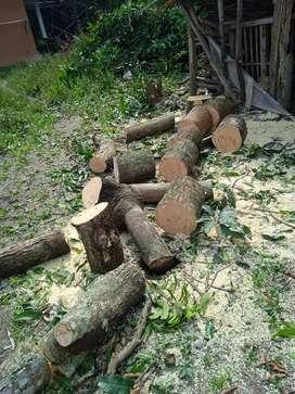 Jasa tebang pohon + jasa angkut barang