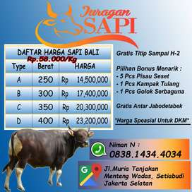 Juragan Sapi Bali