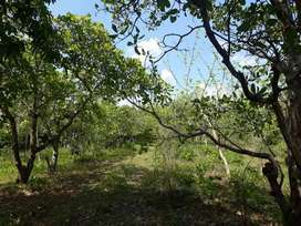 3 Acer Land With 100 Kaju (Cashew) Tree Available For Sale