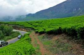 White House Residency,Munnar, Kerala - contact