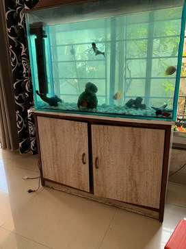 Aquarium with 12mm glass