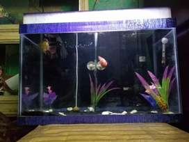 Aquarium setup A to Z