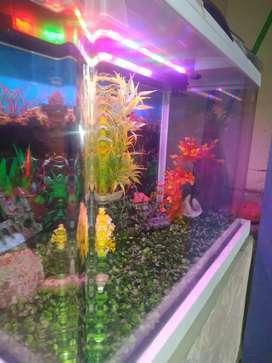 Fiber aquarium
