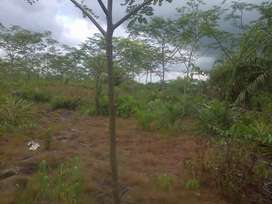 Dijual Cepat Tanah di Sampit *Murah