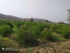 १० acre agriculture land for sale